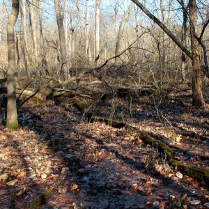 Red Maple Seepage Swamp