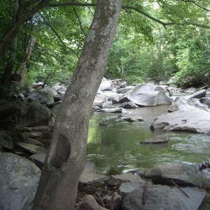 stream habitat