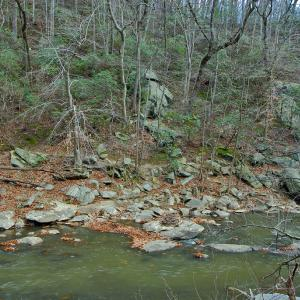Oak - Beech / Heath Forest on steep slope above Rock Creek