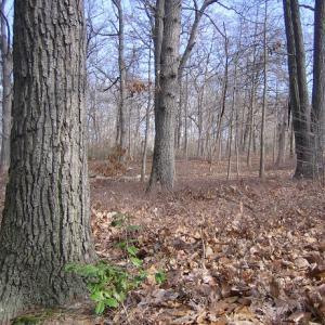 Mixed Oak / Heath Forest